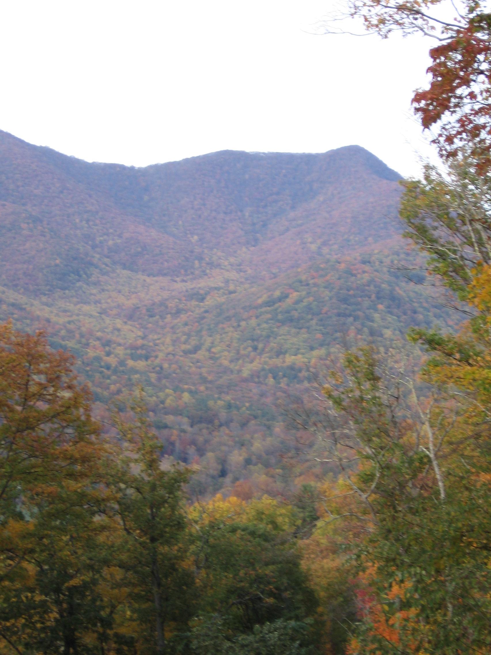 Fall 2010 012