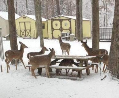 deer at table